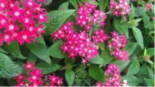 スクリーンショット-2014-09-05-16.07.25.png