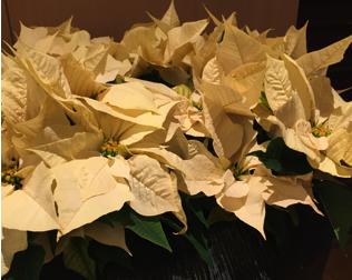 スクリーンショット-2014-12-23-20.22.48.png