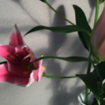 スクリーンショット-2015-01-15-15.27.50.png