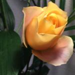スクリーンショット-2015-01-15-15.28.16.png