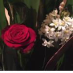 スクリーンショット-2015-01-18-15.41.42.png