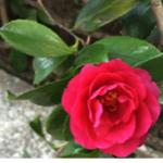 スクリーンショット-2015-02-07-20.01.36.png