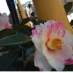 スクリーンショット-2015-02-11-0.26.59.png