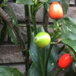 スクリーンショット-2015-02-18-20.12.58.png