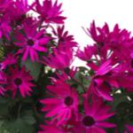 スクリーンショット-2015-03-01-7.51.29.png