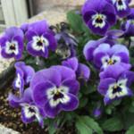 スクリーンショット-2015-03-04-20.54.23.png