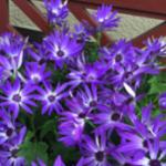 スクリーンショット-2015-03-19-14.21.44.png