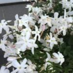 スクリーンショット-2015-04-01-14.05.00.png