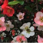 スクリーンショット-2015-04-06-9.51.05.png