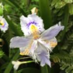 スクリーンショット-2015-04-10-9.06.44.png