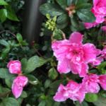 スクリーンショット-2015-04-11-17.52.23.png