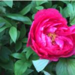 スクリーンショット-2015-04-18-23.08.49.png