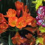 スクリーンショット-2015-04-20-14.20.41.png