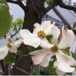 スクリーンショット-2015-04-21-7.59.34.png