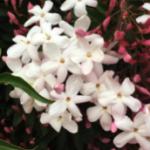 スクリーンショット-2015-04-25-20.14.24.png