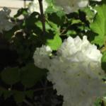 スクリーンショット-2015-05-06-14.33.19.png