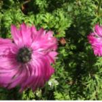 スクリーンショット-2015-05-06-14.35.31.png
