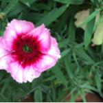 スクリーンショット-2015-05-13-13.51.25.png