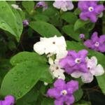 スクリーンショット-2015-05-17-14.56.36.png