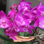 スクリーンショット-2015-05-17-15.38.13.png