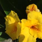 スクリーンショット-2015-05-23-17.58.42.png