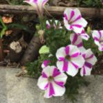 スクリーンショット-2015-05-23-18.00.23.png
