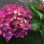スクリーンショット-2015-05-25-12.44.15.png