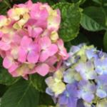 スクリーンショット-2015-05-28-8.24.46.png