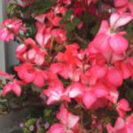 スクリーンショット-2015-05-23-18.15.39.png