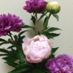 スクリーンショット-2015-06-01-6.43.19.png