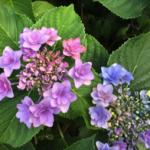 スクリーンショット-2015-06-04-22.06.07.png