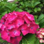 スクリーンショット-2015-06-04-8.39.05.png