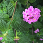 スクリーンショット-2015-06-13-6.13.56.png