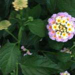 スクリーンショット-2015-06-27-16.06.32.png