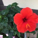 スクリーンショット-2015-06-29-8.47.03.png