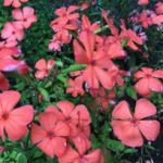 スクリーンショット-2015-07-05-22.50.49.png