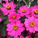 スクリーンショット-2015-07-06-1.16.51.png