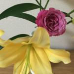 スクリーンショット-2015-07-12-11.30.07.png
