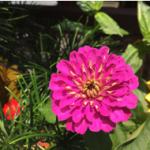 スクリーンショット-2015-07-14-9.08.20.png
