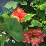 スクリーンショット-2015-07-14-9.09.44.png