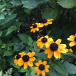 スクリーンショット-2015-07-26-8.44.41.png