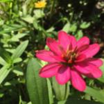 スクリーンショット-2015-07-30-7.13.19.png