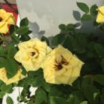 スクリーンショット-2015-08-02-23.59.55.png