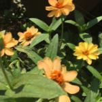 スクリーンショット-2015-08-03-0.10.07.png