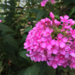 スクリーンショット-2015-08-04-7.29.00.png