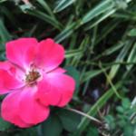 スクリーンショット-2015-08-14-23.41.33.png