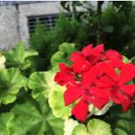 スクリーンショット-2015-08-21-5.21.59.png