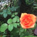 スクリーンショット-2015-09-06-10.48.58.png