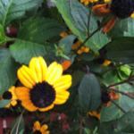 スクリーンショット-2015-09-13-23.54.01.png