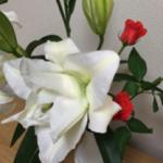 スクリーンショット-2015-10-13-20.52.36.png